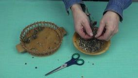 Equipe a coleta de sementes dos seedpods secados do rosea do Alcea filme