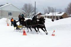 Equipe da condução do cone do obstáculo dos cavalos Foto de Stock