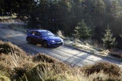 Equipe da reunião do mundo de Subaru Impreza - fotografia de stock royalty free
