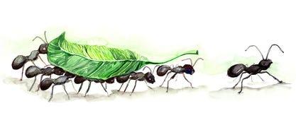Equipe das formigas Fotografia de Stock Royalty Free