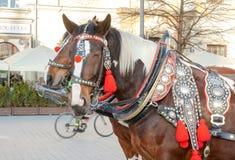Equipe de dois cavalos decorados para turistas de montada em um transporte no quadrado principal em Krakow imagem de stock