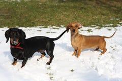 Equipe dos cães Foto de Stock
