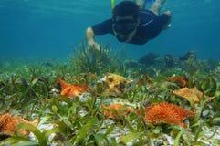 Equipe a estrela do mar dos olhares do underwater do tubo de respiração com um búzio Imagens de Stock