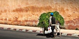 Equipe a grama levando em um asno na cidade do fez Fotos de Stock