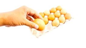 Equipe guardar ovos de uma galinha acima da bandeja do ovo Foto de Stock