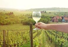 Equipe a mão do ` s que guarda um vidro do vinho branco perto do wineyard Fotos de Stock