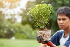 Equipe a mão que guarda a árvore nova para preparam a plantação Fotos de Stock Royalty Free