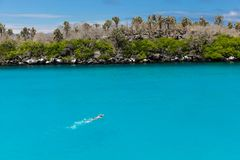 Equipe a natação com tubo de respiração e pás na água cristalina da Turquia imagens de stock