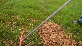 Equipe o ajuntamento da folha do outono no gramado gramíneo verde em uma pilha filme