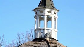 Equipe o assento no telhado da torre de sino vídeos de arquivo