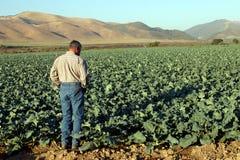 Verificando as colheitas Imagem de Stock Royalty Free