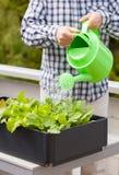 Equipe o jardim vegetal molhando no recipiente no balcão fotografia de stock
