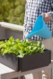 Equipe o jardim vegetal molhando no recipiente no balcão foto de stock