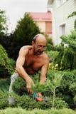 Equipe o jardineiro com as tosquiadeiras à disposição que fazem o zimbro do corte da arte foto de stock royalty free