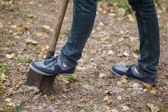 Equipe plantas uma árvore, um homem novo com escavações de uma pá a terra Conceito da natureza, do ambiente e da ecologia imagem de stock royalty free