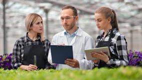 Equipe profissional do trabalhador agrícola que tem a tecnologia crescente de discussão produtiva das plantas video estoque