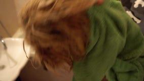 Equipe a secagem seu yorkshire terrier com a toalha após o banho filme