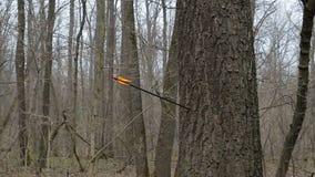Equipe a seta do acendimento na árvore na floresta video estoque