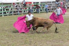 Equipe a sustentação de um cabo carregado por um touro foto de stock