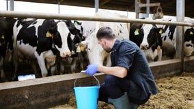 Equipe vacas de alimentação com feno no estábulo na exploração agrícola de leiteria video estoque