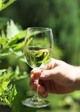 Equipe vidros da terra arrendada da factura de vinho branco um brinde Imagens de Stock Royalty Free