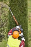 Equiped worker pruning a tree on a crane. Gardening Stock Images