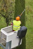 Equiped worker pruning a tree on a crane. Gardening. Works Stock Images