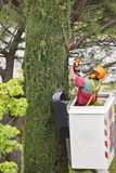 Equiped worker pruning a tree on a crane. Gardening. Works Royalty Free Stock Photos