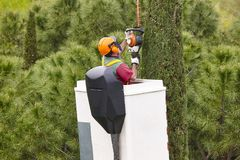 Equiped worker pruning a tree on a crane. Gardening. Works Stock Photo