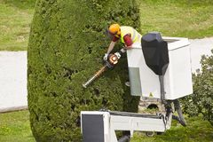 Equiped worker pruning a tree on a crane. Gardening. Works Stock Photos