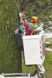 Equiped worker pruning a tree on a crane. Gardening. Works Royalty Free Stock Photography