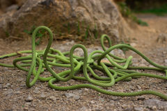Equipment for climbing are on the rope. Stock Photography
