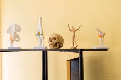 Equipment human body anatomy include skull,bone,brain model for education research and medical study. In room stock photo