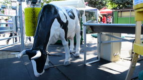Equipment for keeping cows and model of a cow stock footage
