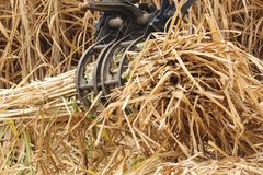 Equipment machine harvest sugarcane. Royalty Free Stock Image