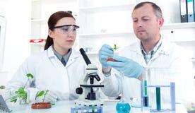 Equipo de científicos en un funcionamiento del laboratorio imagen de archivo