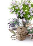 Equipo de jardín con las flores violetas Fotografía de archivo