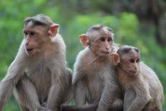 Equipo de los monos Fotos de archivo