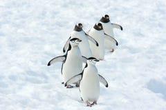 Equipo de los pingüinos Fotos de archivo libres de regalías