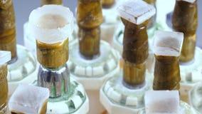 Equipo de proceso crudo de la piedra preciosa Gemas en los palillos del dop del metal para una faceta en una máquina de talla almacen de metraje de vídeo