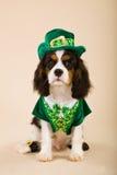 Equipo del leprechaun del perrito que desgasta arrogante Imagen de archivo