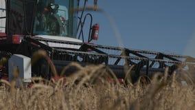 Equipo del material agrícola para el trigo o Rye de la cosecha en la industria de la agricultura almacen de video