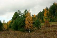 Equipo del otoño Fotografía de archivo