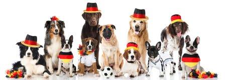 Equipo del perro del fútbol Foto de archivo libre de regalías