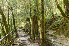 Equipped trail in the yew-boxwood grove on the hillside Stock Images