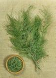 Equiseto, horsetail Ervas secadas Fitoterapia, phytotherapy fotos de stock