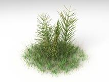 Equisetum arvense Στοκ εικόνα με δικαίωμα ελεύθερης χρήσης