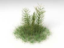 Equisetum arvense. Render illustration of the Different Plants and Grass Royalty Free Stock Image