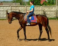 Equitação Fotos de Stock
