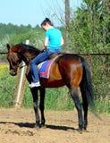 Equitação Foto de Stock Royalty Free
